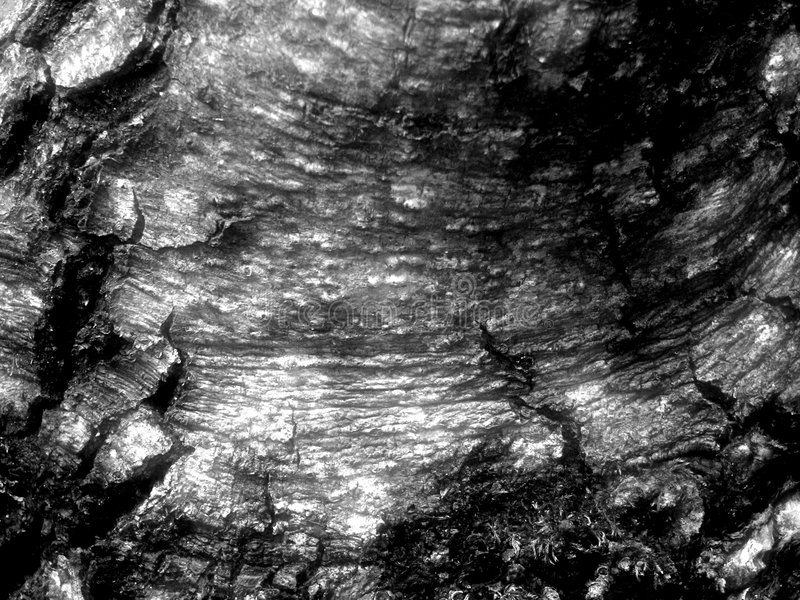 åldrigt trä arkivbild