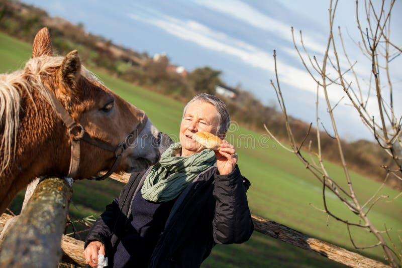 Åldringen kopplar ihop att dalta en häst i en paddock royaltyfria bilder