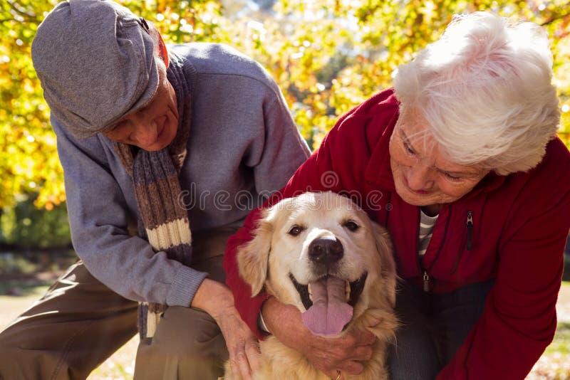 Åldringpar med deras älsklings- hund arkivfoton
