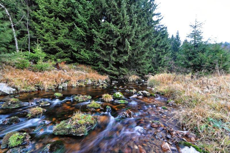 Ånga som flödar mellan, vaggar och torrt gräs royaltyfria foton