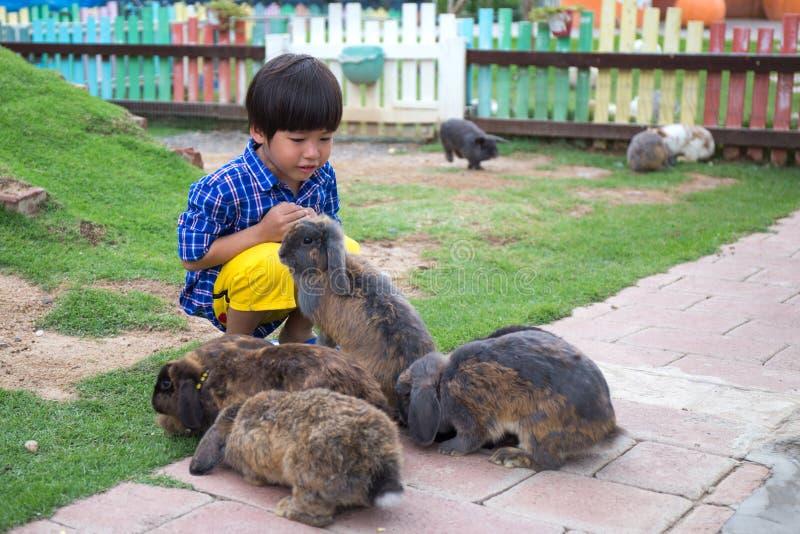 4 år lycklig asiatisk ungelek med gruppen av kaniner royaltyfria bilder