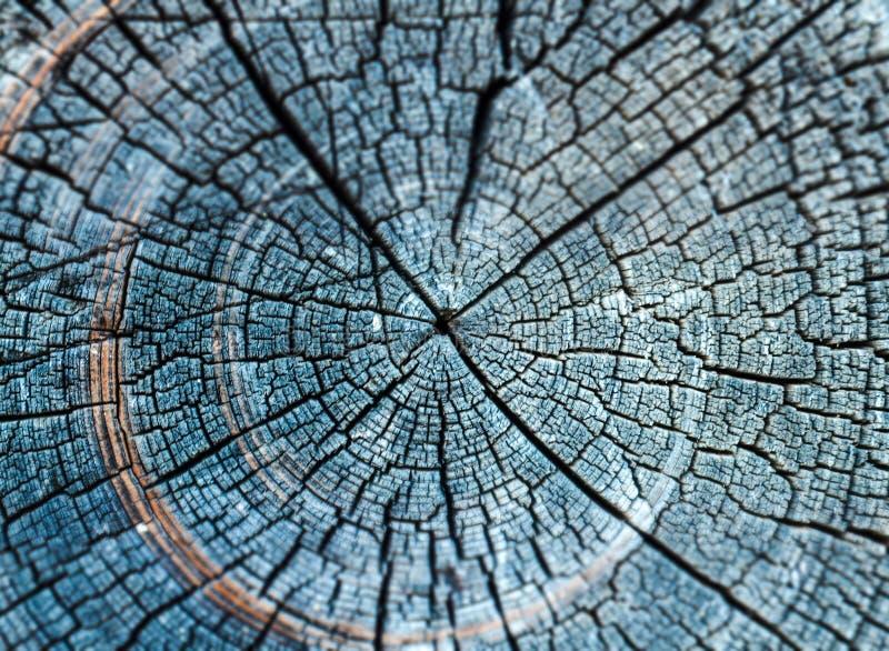 Årliga cirklar av gammalt trä arkivbild