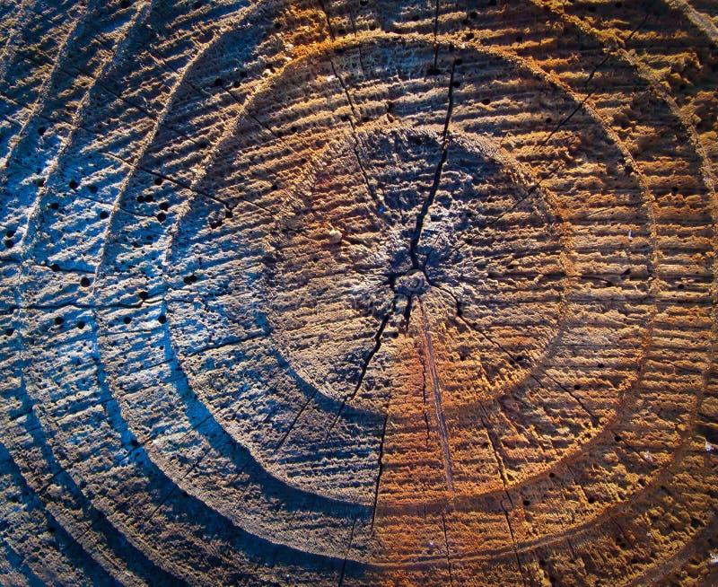 Årliga cirklar i en trädstam royaltyfri bild
