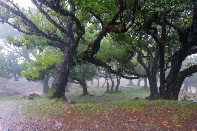 Åskväder med tungt hagel och att regna snöslask duschar i sommar arkivfoto