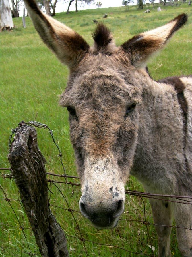 Download åsna arkivfoto. Bild av wild, djurliv, åsna, natur, buske - 281678
