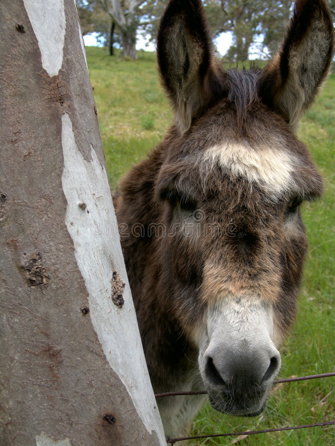 Download åsna fotografering för bildbyråer. Bild av husdjur, tree - 281679