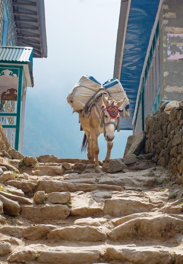 Åsna i berg i byn, Nepal royaltyfri foto