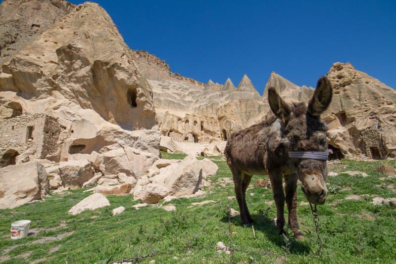 Åsna i fältgrottahus av Cappadocia Goreme Turkiet arkivfoto