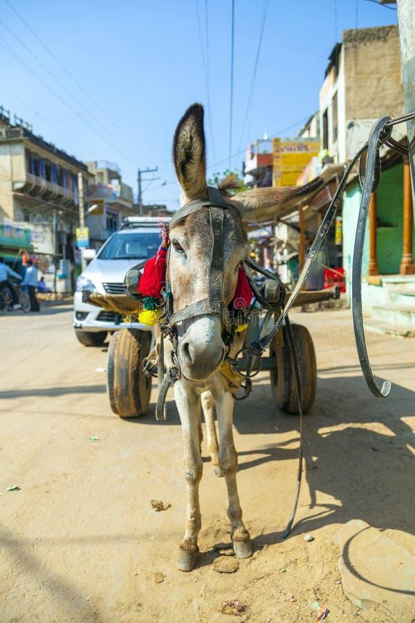 Åsna med vagnen i Indien royaltyfria bilder