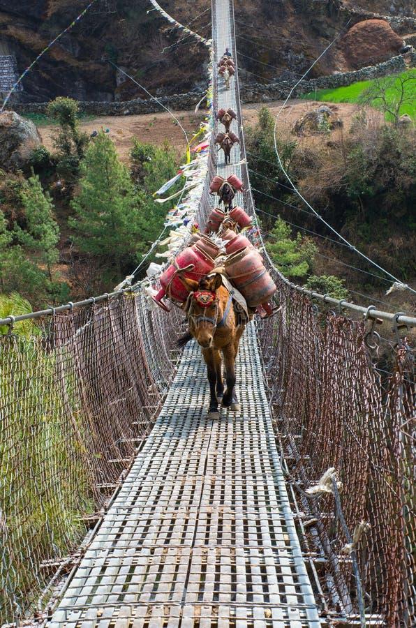 Åsnahusvagn i berg på bron, Nepal arkivbilder