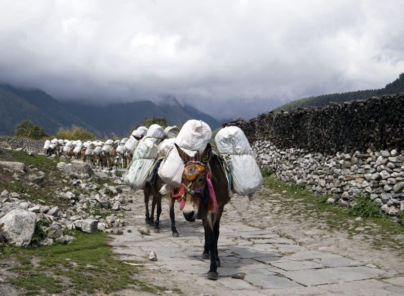 Åsnahusvagn i Nepal royaltyfri foto