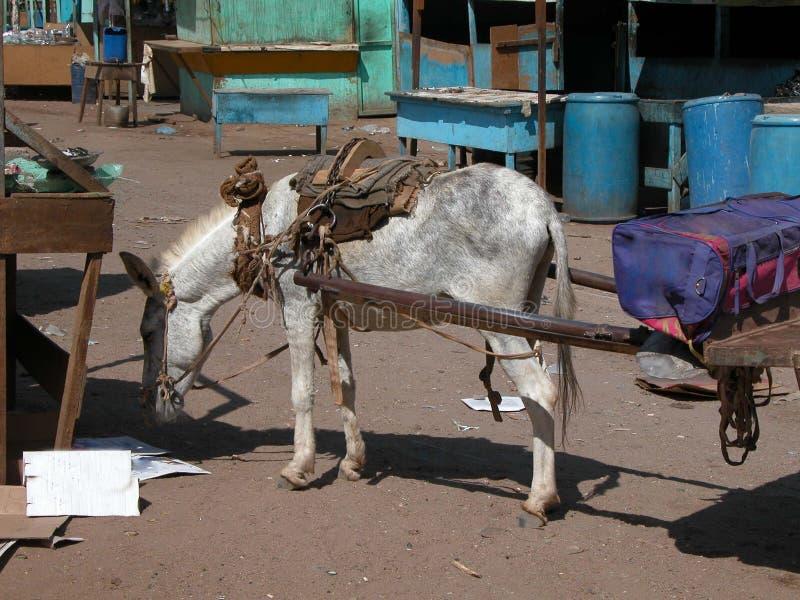Åsnavagn i basar i Egypten arkivfoto