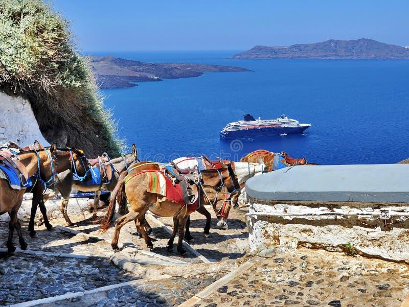 Åsnor av Santorini arkivfoto