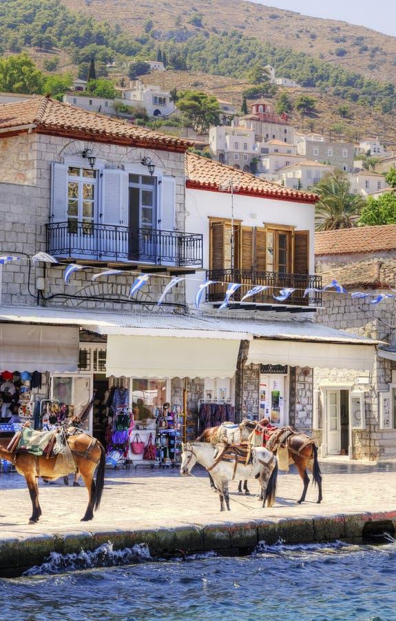 Åsnor på den grekiska ön arkivbild