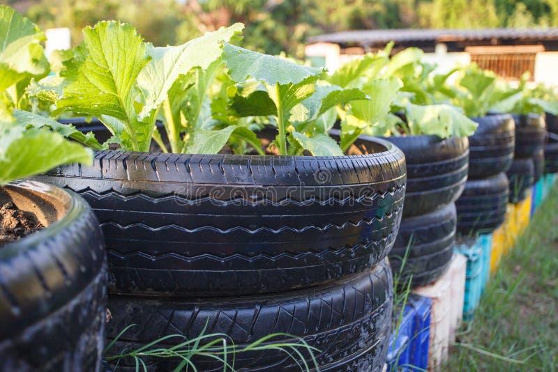 Återanvänd av gummihjulet som används i organisk grönsaklantgård arkivfoton