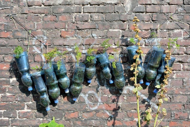 Återanvända plast-flaskor som används som en planter arkivbilder