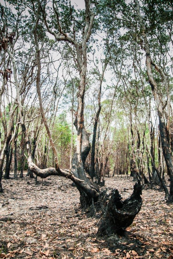 Download Återställa djungeln arkivfoto. Bild av trees, återställa - 27286710