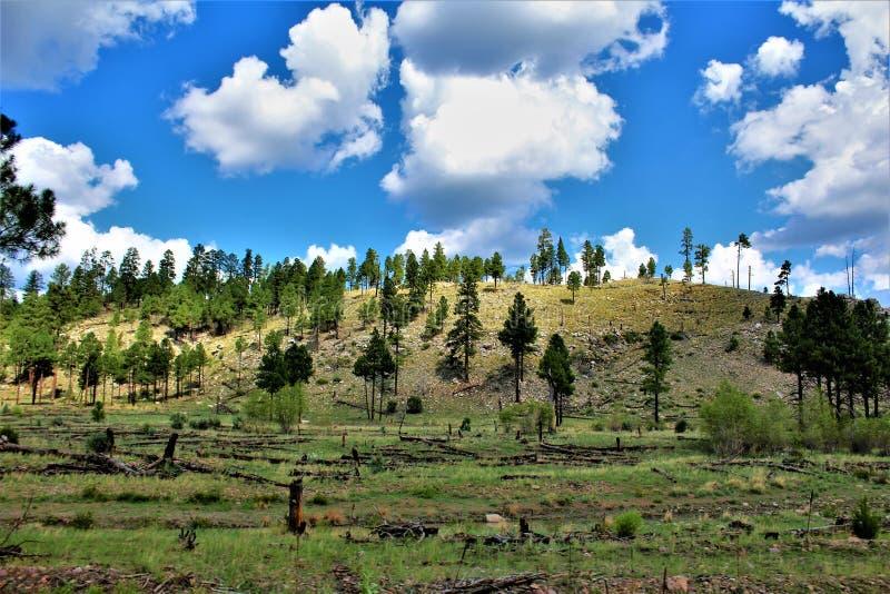 Återväxt 2002 för brand för Apache Sitgreaves nationalskogrodeo-Chediski som av 2018, Arizona, Förenta staterna arkivfoton