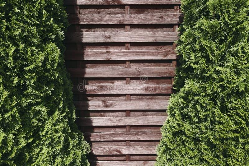 Åtlöje upp den gamla bruna väggen av träplankor och två prydliga träd på royaltyfria bilder