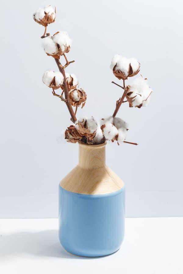 Åtlöje upp torrt bomullsris i vas på det bokhylla eller skrivbordet Vit-blått färger Minimalistic begrepp royaltyfria bilder