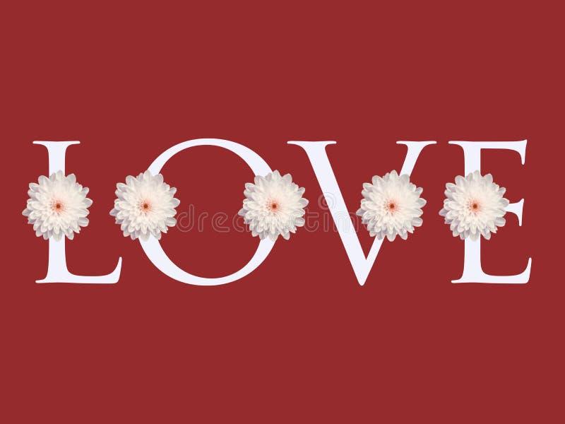 Åtskillig för blommaförälskelse för vit tusensköna bakgrund för kort för dag för valentin för design för bokstav royaltyfria foton