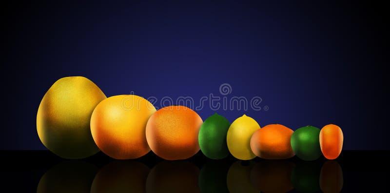 Åtta populära citrusfrukter är föreställt från vänster till höger: pomelo, grapefrukt, apelsin, limefrukt, citron, tangerin, nyck royaltyfri illustrationer