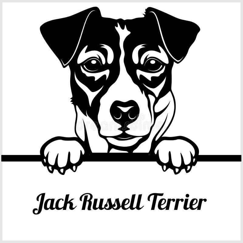 杰克罗素狗-偷看狗- -品种在白色隔绝的面孔头 库存例证