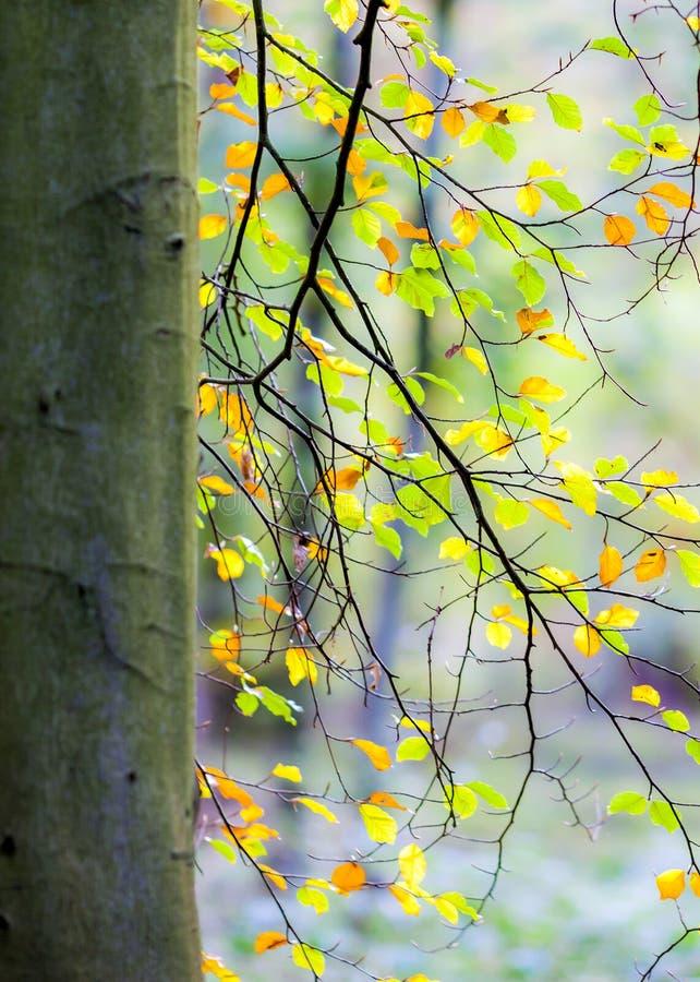 松弛和平安的场面在有感觉的森林里平衡和宁静的 库存照片