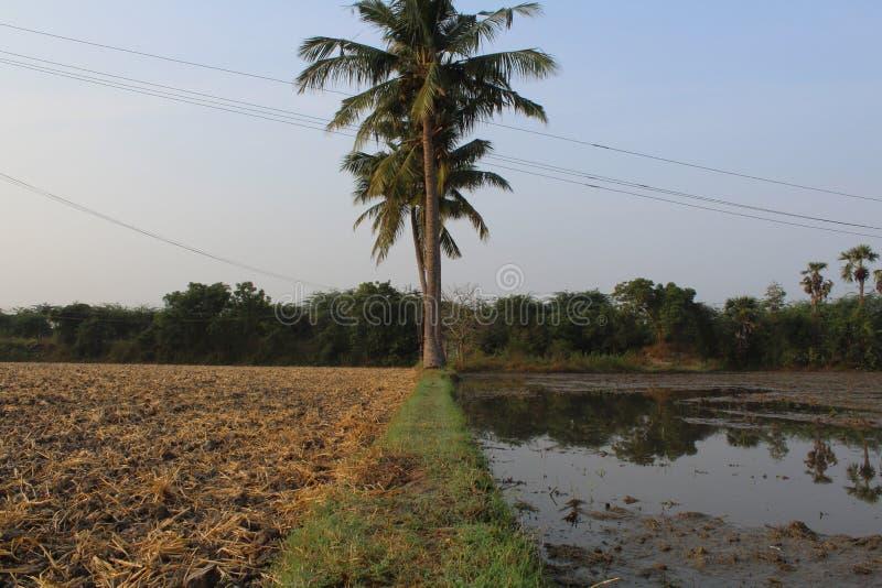 村庄农夫土地用甘蔗和椰子 免版税库存照片