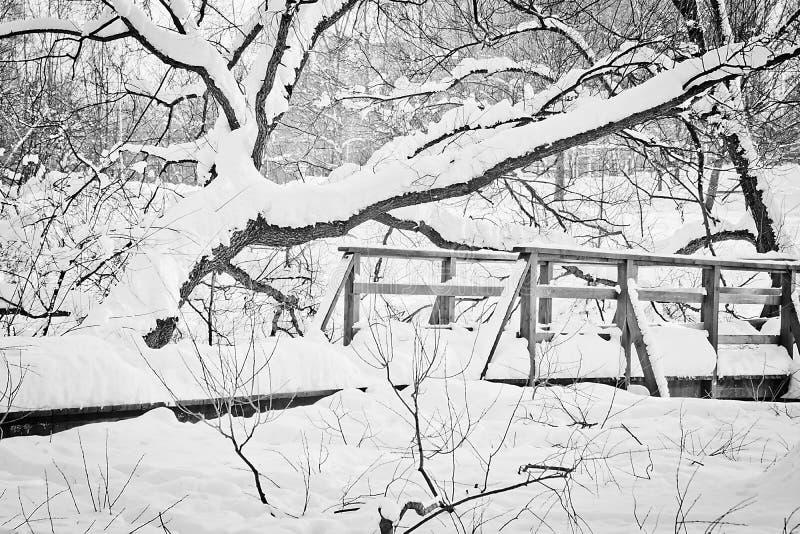 桥梁在一个城市公园在黑白一个的冬日 免版税图库摄影