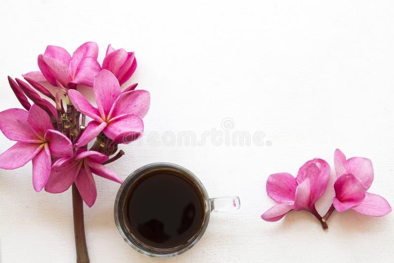 桃红色亚洲的花赤素馨花地方植物群用咖啡 免版税库存照片