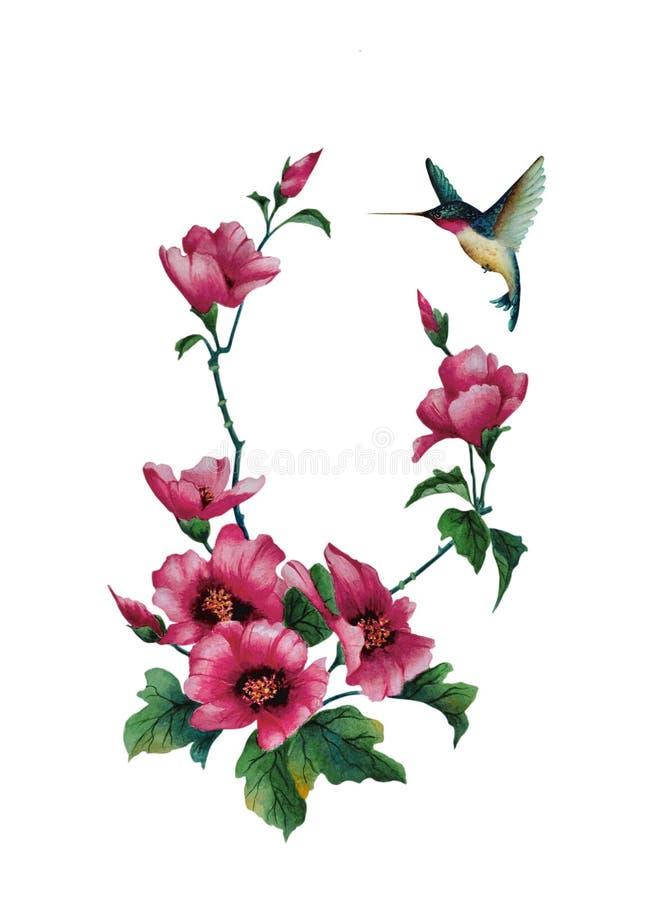 桃红色冬葵花和蜂鸟 免版税图库摄影