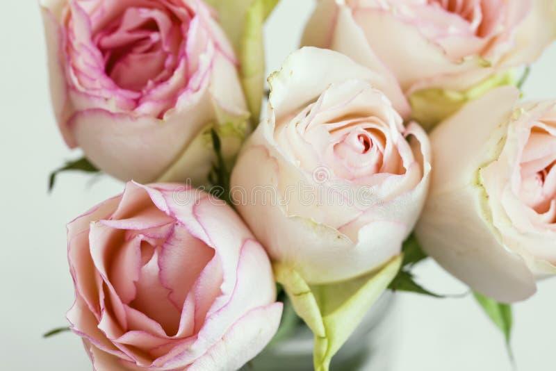桃红色玫瑰花束,软的精美玫瑰特写镜头,春天在花瓶的玫瑰花束 图库摄影