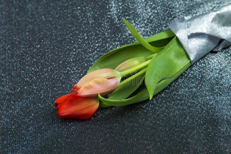 桃红色郁金香的春天嫩芽与绿色叶子的反对背景 图库摄影