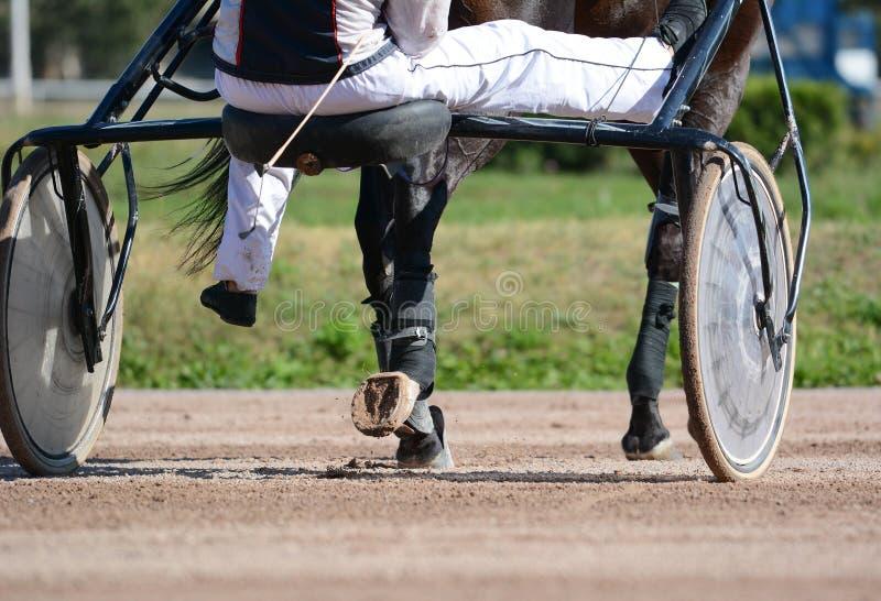 棕色小跑步马马和马鞔具的腿 赛跑在细节的轻驾车赛用马 免版税库存图片
