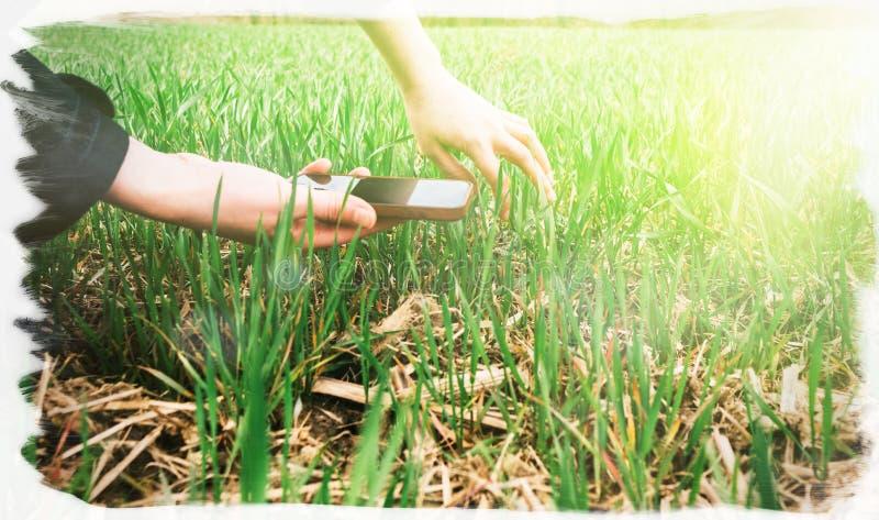 检查收获的年轻农业妇女生物学家 免版税库存图片