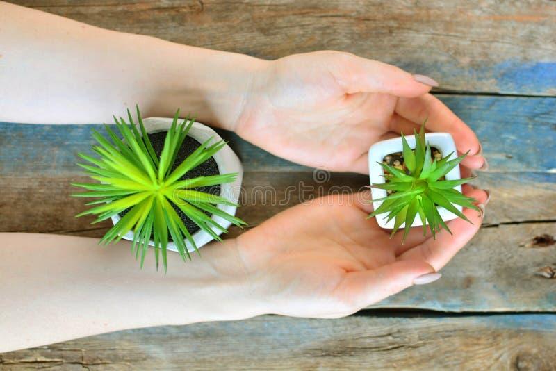 植物关心概念 有绿色家庭植物的女孩手在土气木背景的花盆的 图库摄影