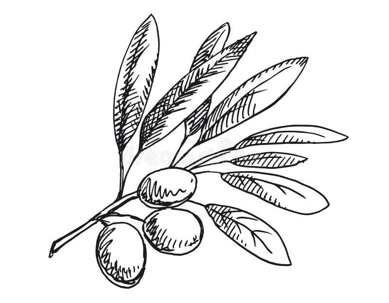 橄榄树枝例证 黑白版本 图库摄影