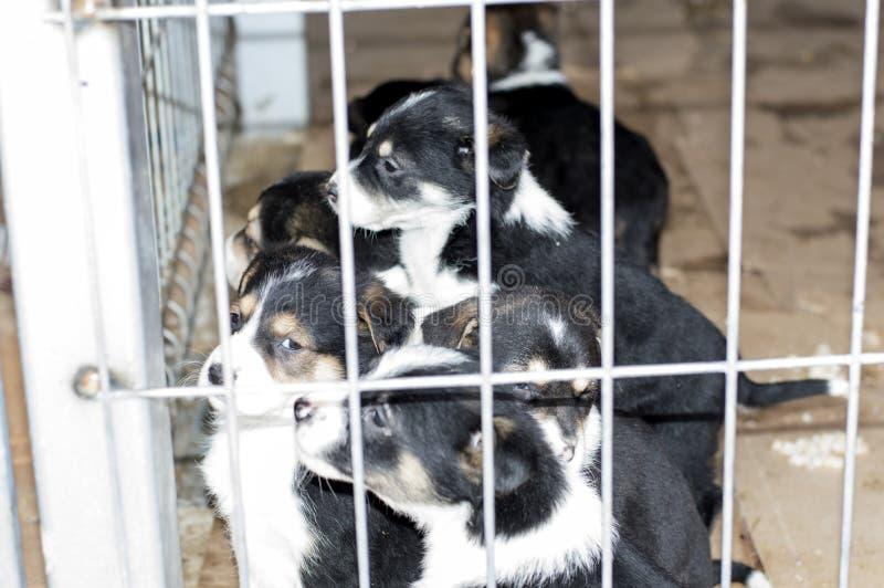 正在寻找在避难所的一个小组小狗一名新所有者 库存照片