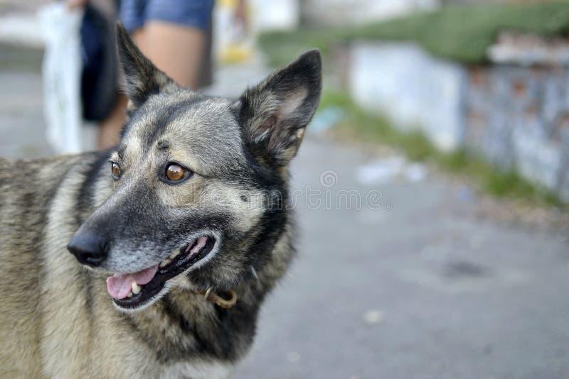 步行的滑稽的狗 免版税库存图片