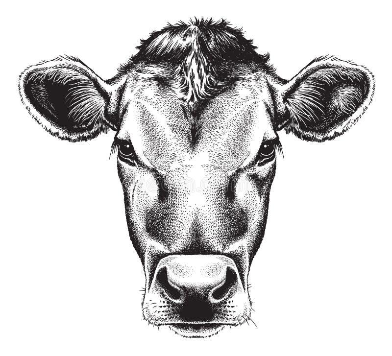 母牛的面孔的黑白剪影 向量例证