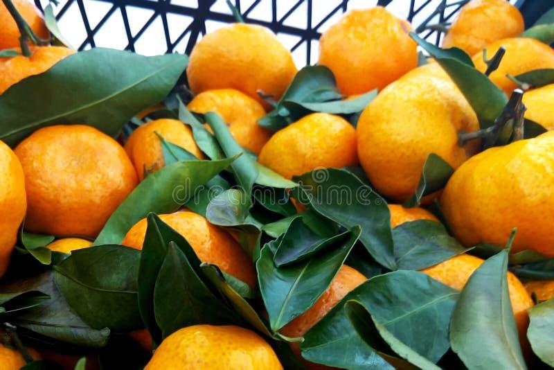 水多的橙色蜜桔桔子,普通话,柑桔,与叶子的柑橘水果在市场上 免版税库存图片