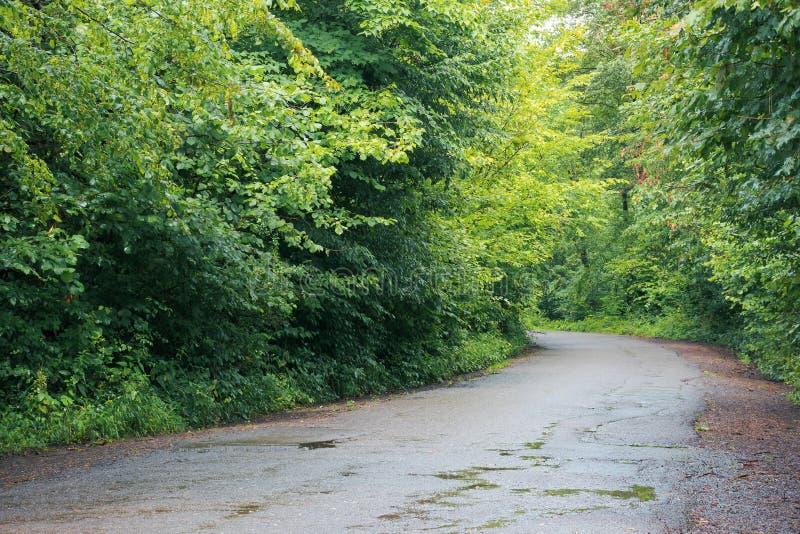 沥青乡下公路通过森林 库存照片