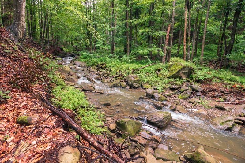 河在森林夏天阴暗天 免版税库存图片