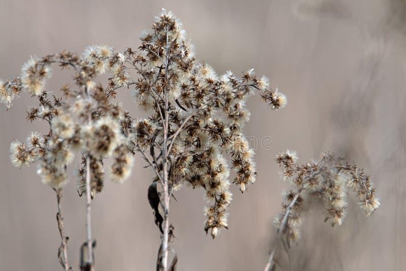 河的多瑙河植物 免版税库存照片