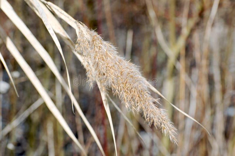 河的多瑙河植物 免版税库存图片