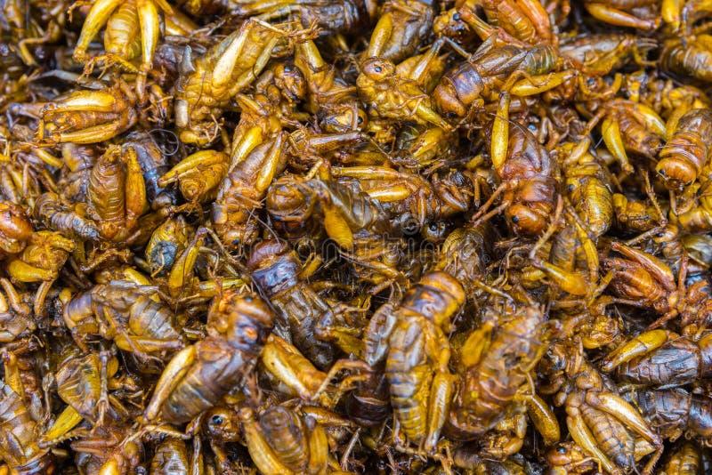 油煎的昆虫食物在街道食物市场上 免版税库存照片