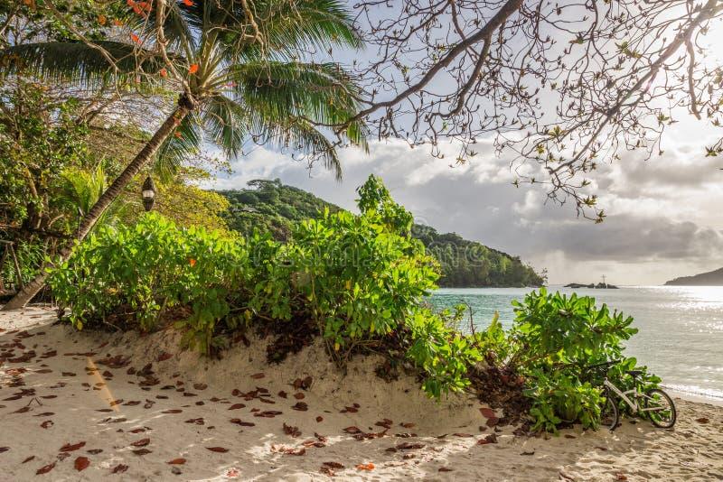 沙滩和棕榈在港Launay,马埃岛,塞舌尔 库存图片