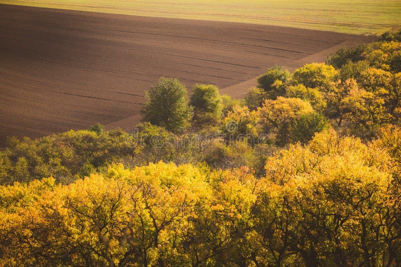 波浪秋天领域在Moravian托斯卡纳,捷克 免版税库存图片