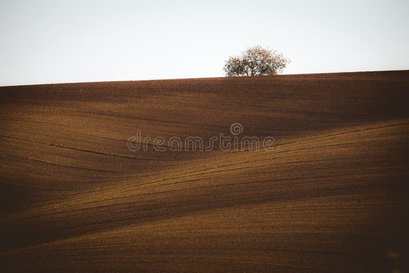 波浪秋天领域在Moravian托斯卡纳,捷克 免版税库存照片